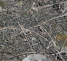 Red Sided Garter Snake Den in Narcisse Manitoba by rhamm