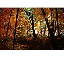 Autumn Serenity Photographic Print