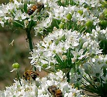 Honey Bees & Garlic Chives by LCooper
