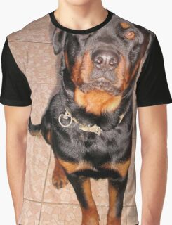 Portrait Of A Young Rottweiler Male Sitting Graphic T-Shirt