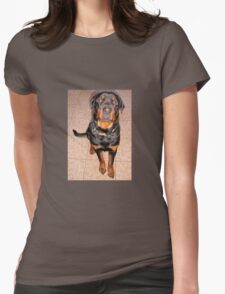 Portrait Of A Young Rottweiler Male Sitting Womens Fitted T-Shirt