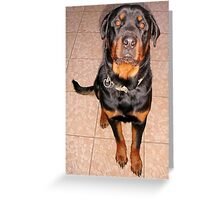Portrait Of A Young Rottweiler Male Sitting Greeting Card