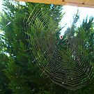 The Autumn Sun, the Spider and His Web by Vivian Eagleson