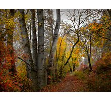 Takena Trail ~ Fall Colors ~ Photographic Print
