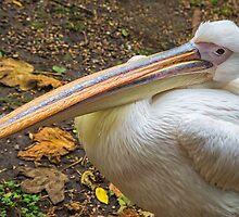 Pelican by Ellesscee