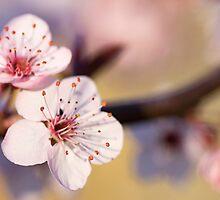 Signs Of Spring by Josie Eldred