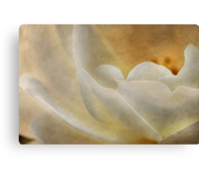 Candlelight rose Canvas Print