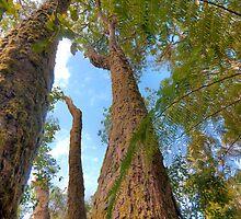 Antarctic Beech Trees by Dean Bailey