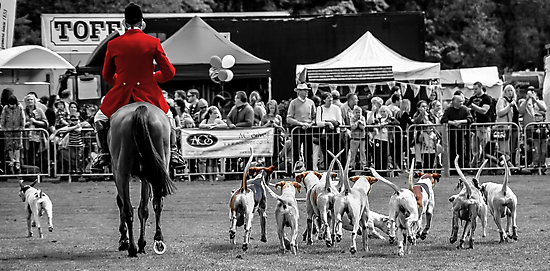 Horse & Hounds by Andrew Pounder