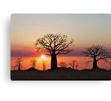Boab Silhouette Sunset in Derby Canvas Print