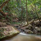 Rainforest Stream, Borders National Park by Dean Bailey