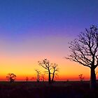 Boab Trees at Sunset on the edge of the Marsh, derby W.A. by Mary Jane Foster