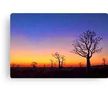 Boab Trees at Sunset on the edge of the Marsh, derby W.A. Canvas Print