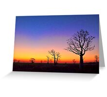Boab Trees at Sunset on the edge of the Marsh, derby W.A. Greeting Card