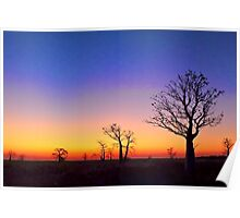 Boab Trees at Sunset on the edge of the Marsh, derby W.A. Poster