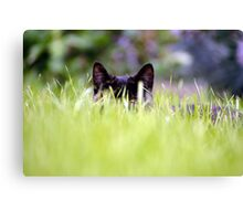 Catch A Cat's Eye Canvas Print
