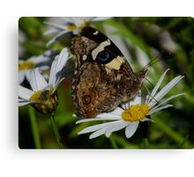 Chasing More Butterflies Canvas Print