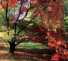 Arboretum Colour by Cat Perkinton