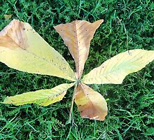 Beautiful chestnut leaf by fotosbykarin