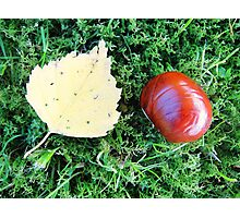 Cute brown chestnut and fall leaf Photographic Print