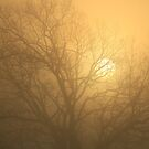 Sigh For a March Morn by Kelly Chiara