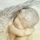 angelo by lucyliu
