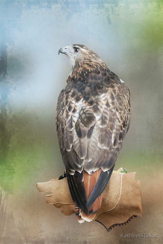 Red Tail Hawk by KathleenRinker