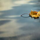 Autumn Leaf by Yelena Rozov