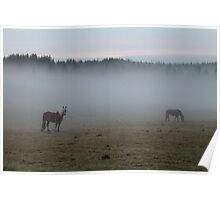 Horses. October evening landscape. Norway. Poster