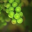 Grapes by Annie Lemay  Photography