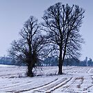 Winter Trees by vivsworld
