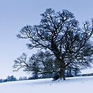A Tree in Winter by vivsworld