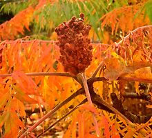 Sumac in the fall by Shulie1