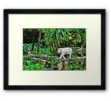 White Tigerrr Framed Print