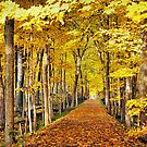 The Autumn Path by Brian Gaynor