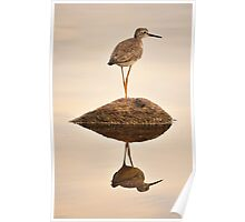 Upland Sandpiper Poster