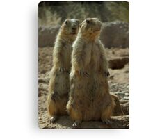 Black-tailed Prairie Dogs~ I got your Back! Canvas Print