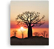 Boab Sunset along the Derby Marsh W.A. Canvas Print