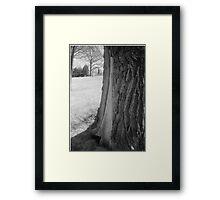 Tree Closeup2 Framed Print