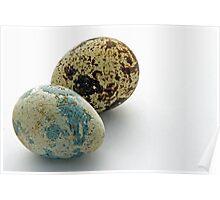 Quails Eggs Poster