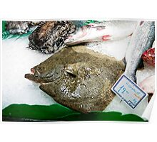 FLAT FISH Poster