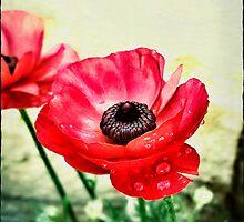 Red Anemone by AlyZen