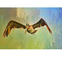 Pelican on Texture Photographic Print