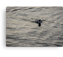 Moire Silk Water and a Long Tailed Duck Canvas Print