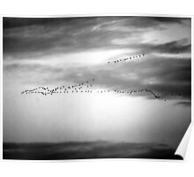 Bird formation. Poster