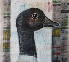 Shelduck by Thea T