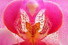 Orchid Heart by Jo Nijenhuis