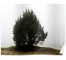 3.11.2013: Juniper Tree II Poster