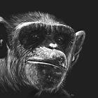Almost Human - chimpanzee by Heather Ward