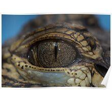 Gator Eyeball Poster